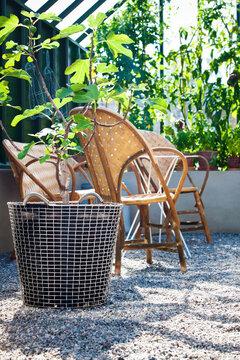 Istutussäkkiin on kätevä istuttaa puita, kasveja tai kukkia