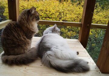 Kissatarhan rakentaminen – omakotitalon ikkunan alle kissojen valtakunta