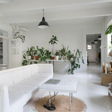 Kauniit viherkasvit loft-asunnon olohuoneessa